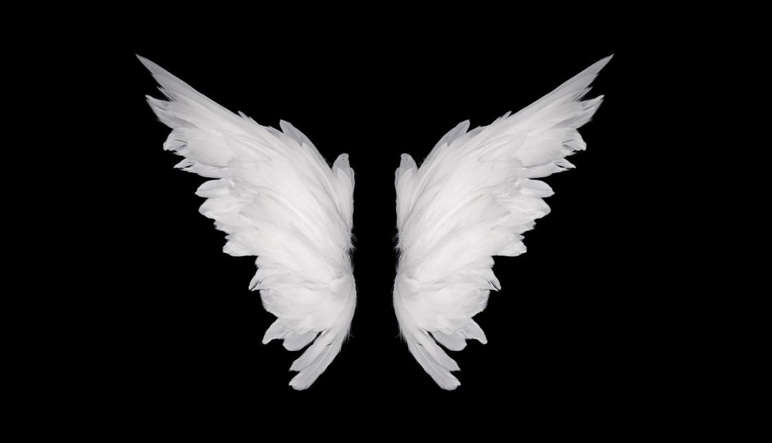 Weiße Flügel auf schwarzem Hintergrund