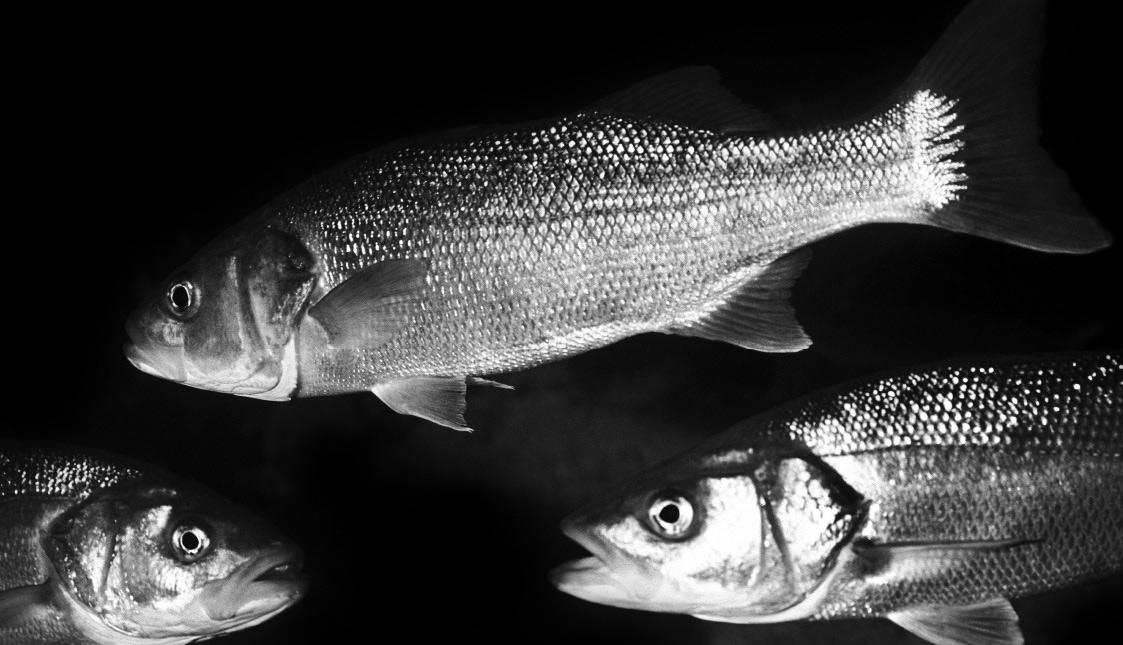 Fische auf schwarzem Hintergrund