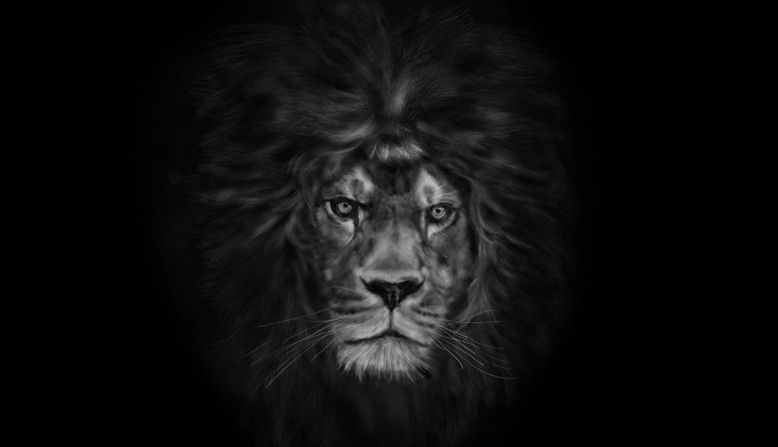 Löwe auf schwarzem Hintergrund