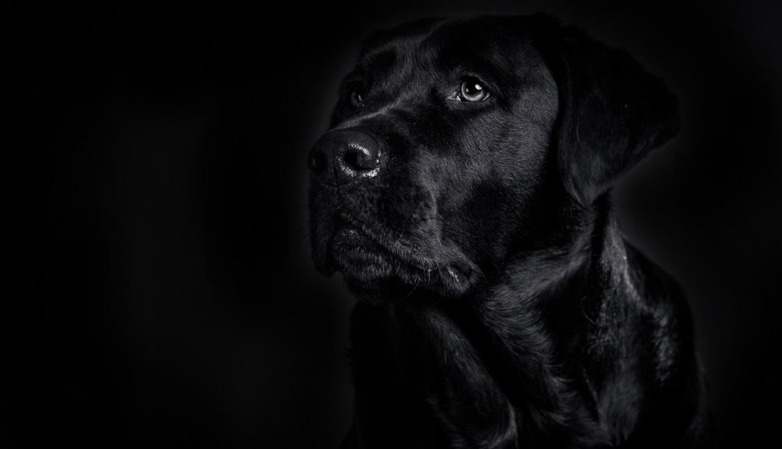 Ein schwarzer Hund auf schwarzem Hintergrund