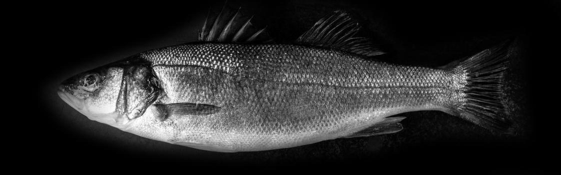 Ein Fisch auf schwarzem Hintergrund